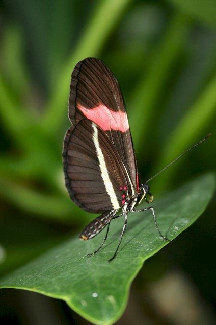 Butterfly 31